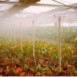 Sistemes de irrigació